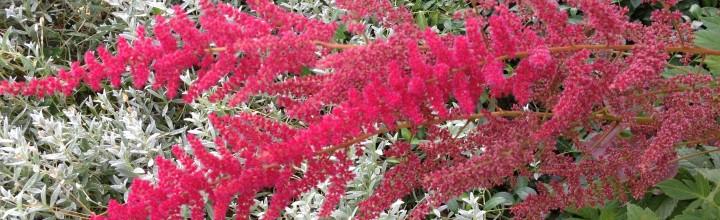 Plantaholica Incurablis